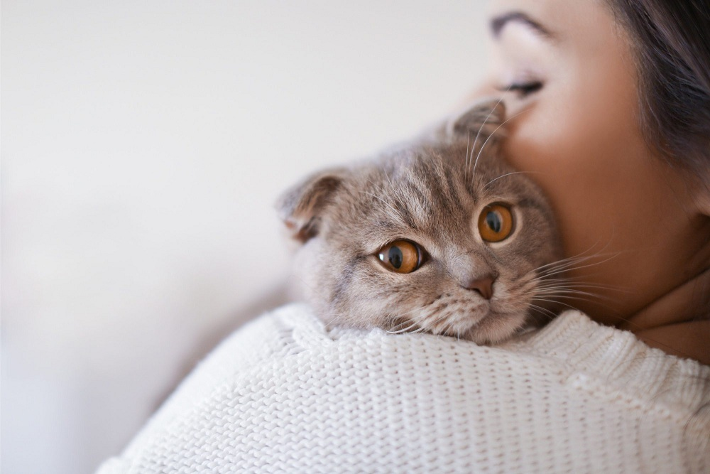 Cat Care – The Best, The Easiest, The Most Natural