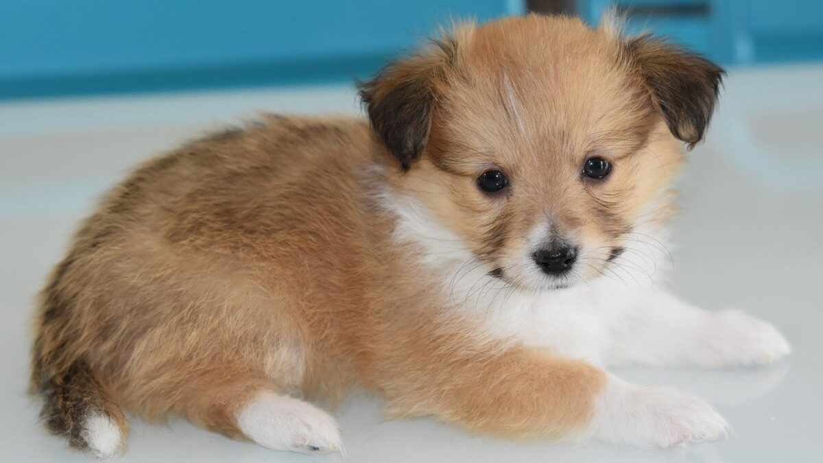 How To Buy A Puppy Online Safely?